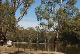 Murray River near the Narrows, Barmah