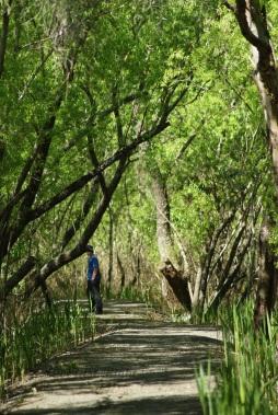 Pondage Walking track