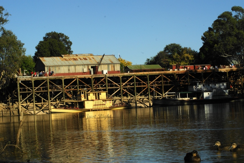 A duck's view of the Port of Echuca