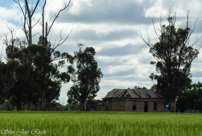 A little old house in the middle of a crop