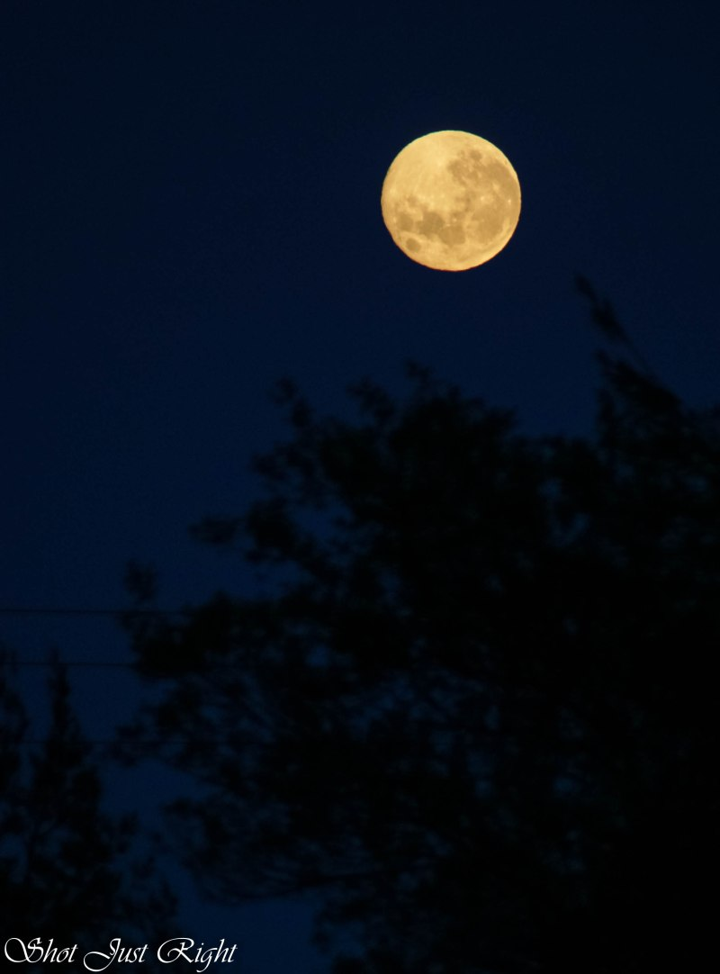 Moon this morning from My backyard