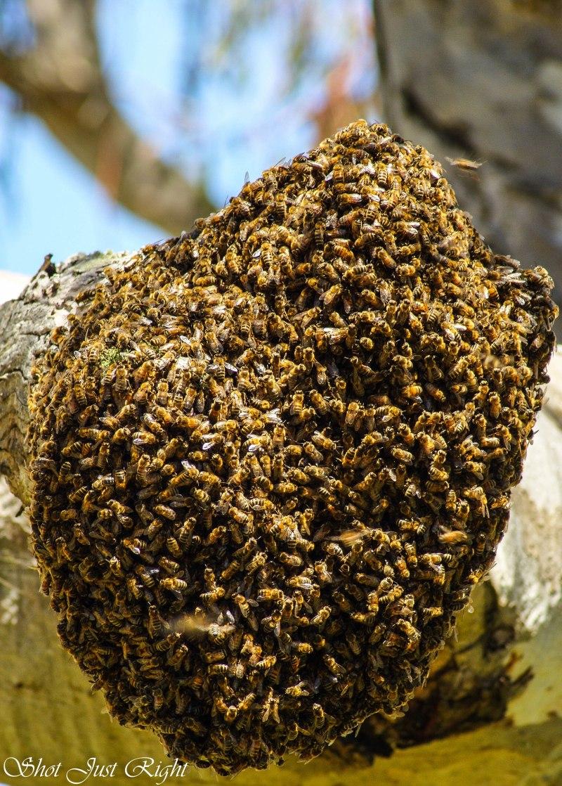 new beehive