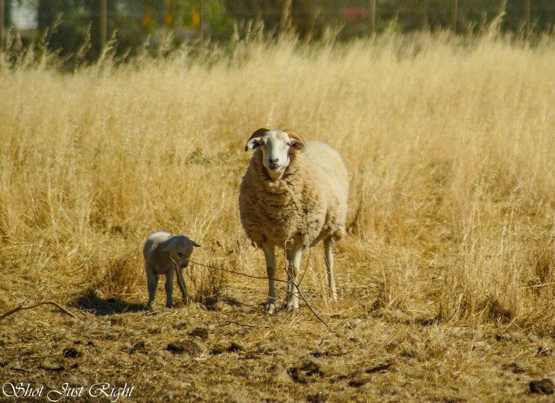 In Mum's shadow