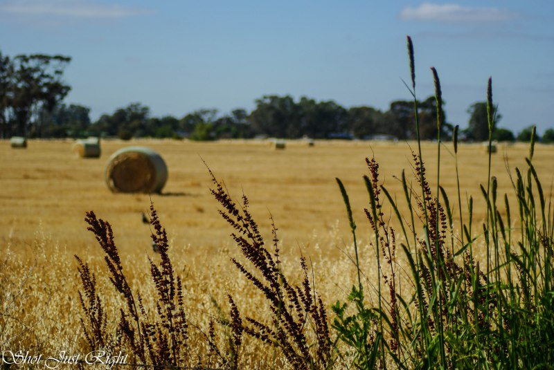 Hay Paddock with grasses