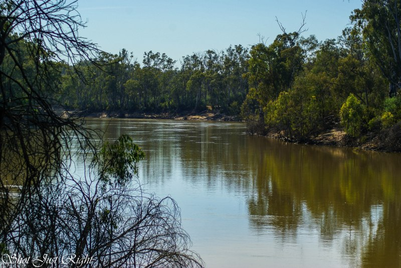 Murray River from Horse shoe lagoon