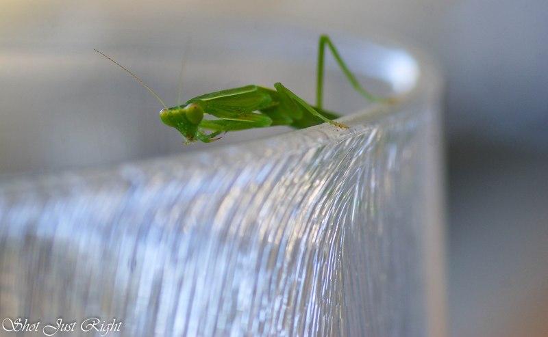 Prey Mantis - So Little