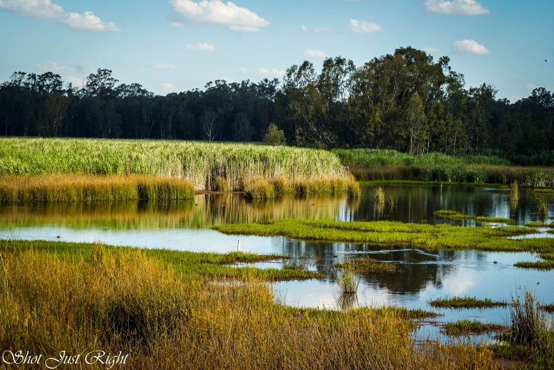 Reed Beds Bird Hide at Mathoura