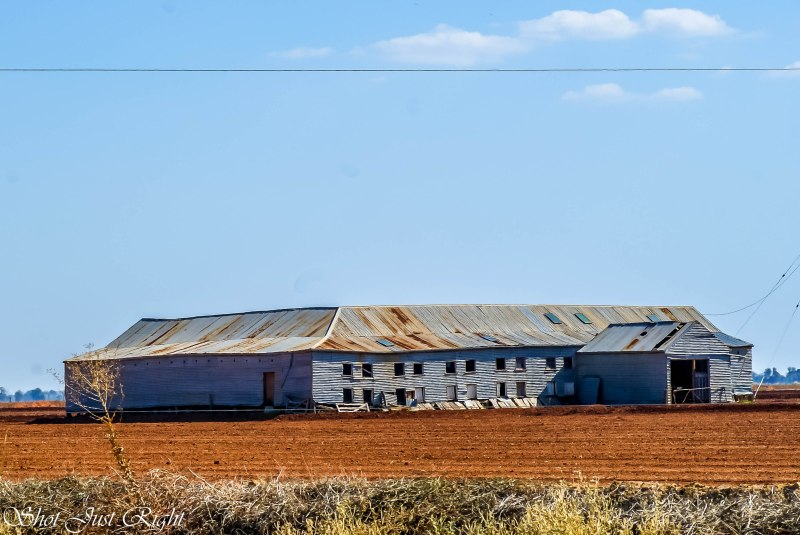 "Old Shearing Shed at ""Myrtle Park"" near Finley"