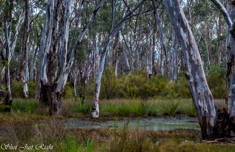 Swampy area in Moama