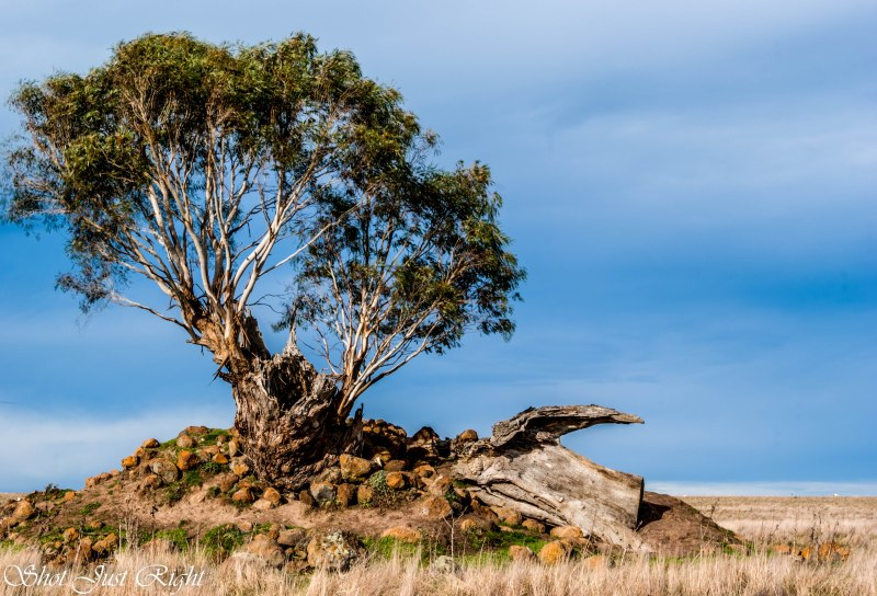 Lone tree on Rocky outcrop