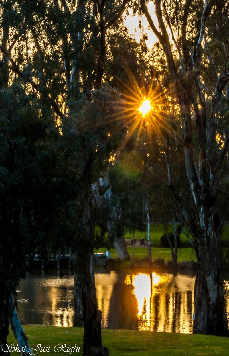 Evening Sun through the trees