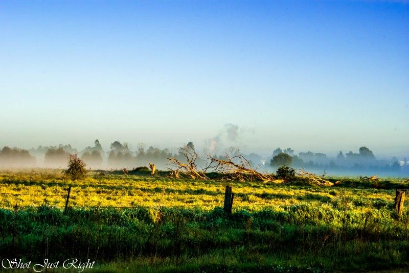 Sun across a foggy paddock