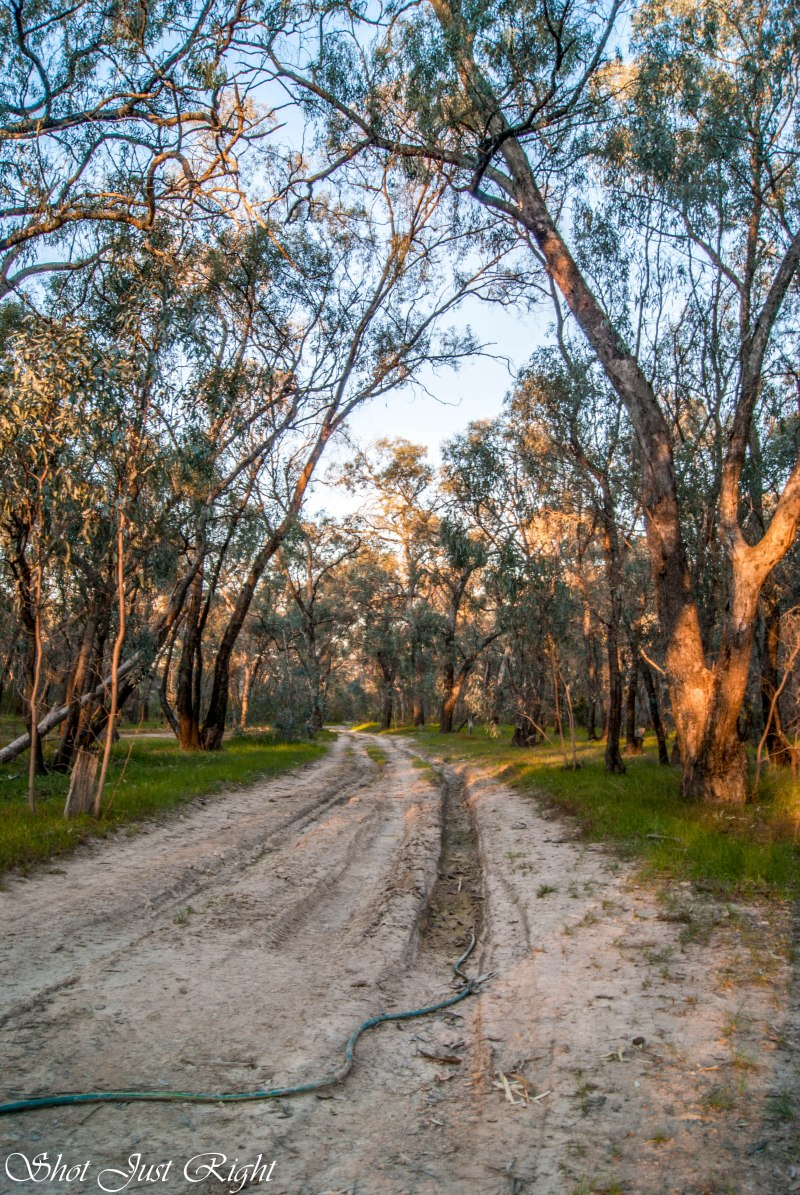 Bush track in the evening light