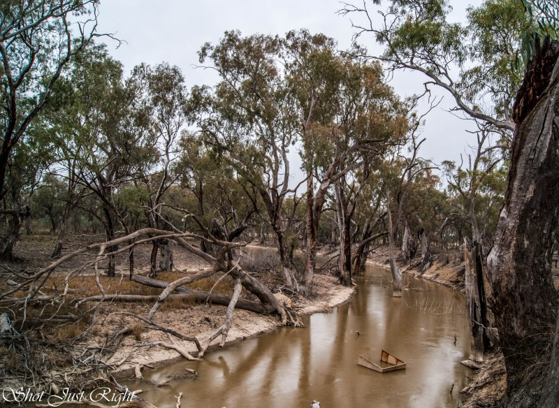 Creek at Field and Game Swan Hill