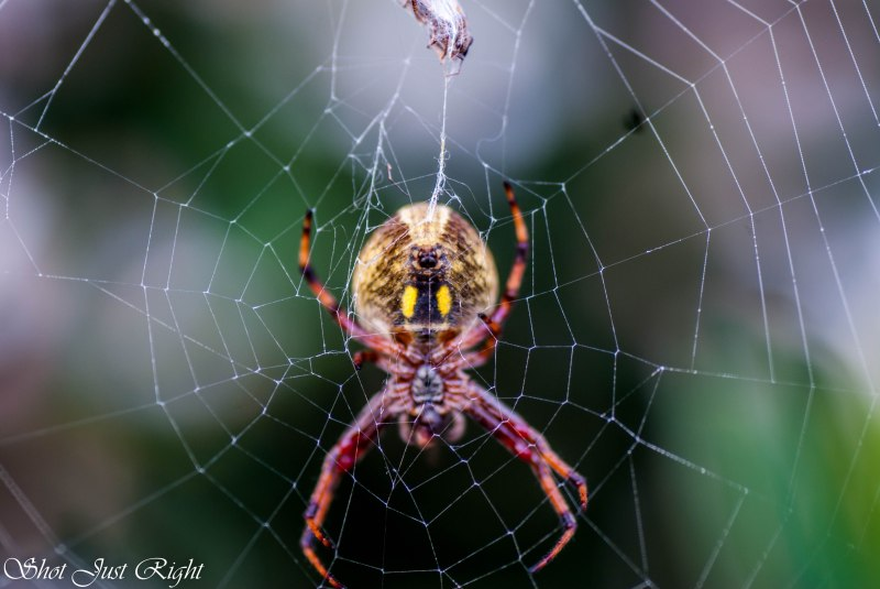 Underbelly And Web