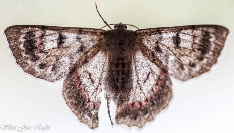 Moth - on the inside of a window