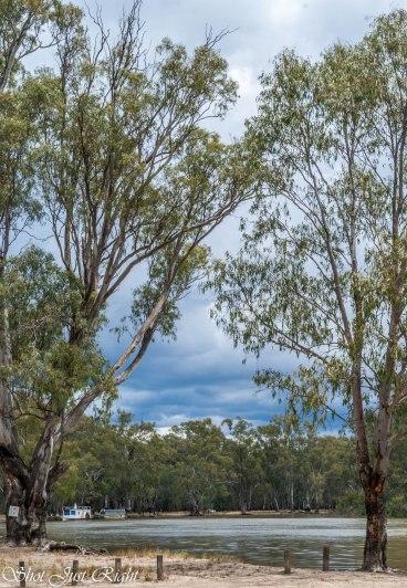 Enjoying the Murray At Barmah under threatening Skies