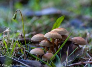 Tiny Fairies houses