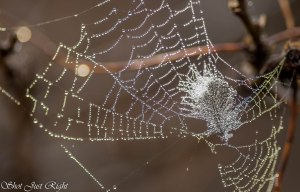 Spiderweb and Feather