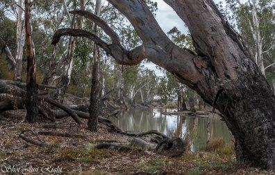 Wakool River, NSW
