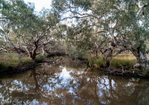 Creek on Tennyson - Bendigo Road near Kamorooka Station