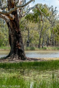 Murray River and Swampy area