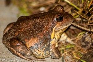 Frog in the dark